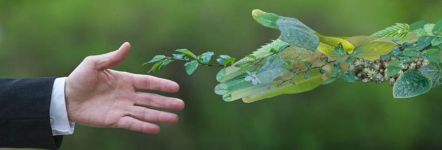 Definiciones: un pequeño glosario de vocabulario sobre el medio ambiente