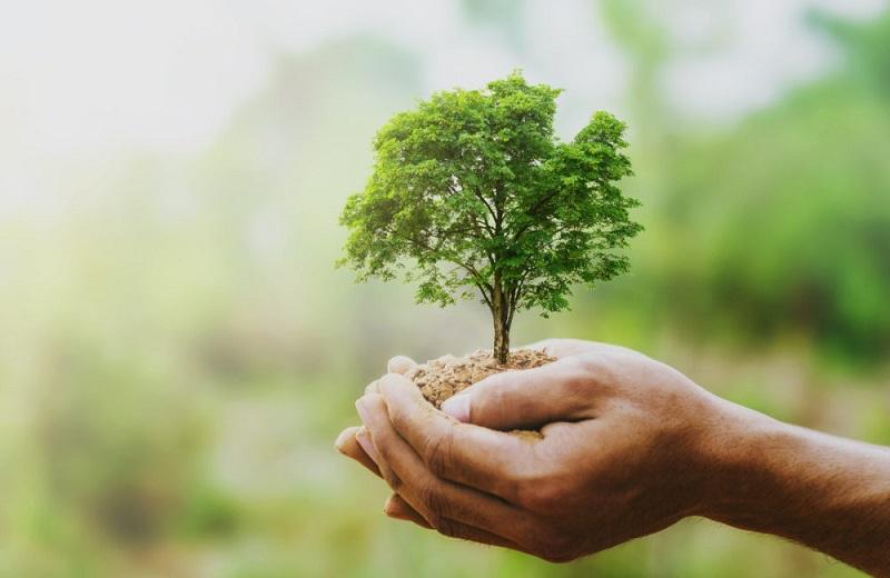 La importancia de cuidar de nuestros bosques