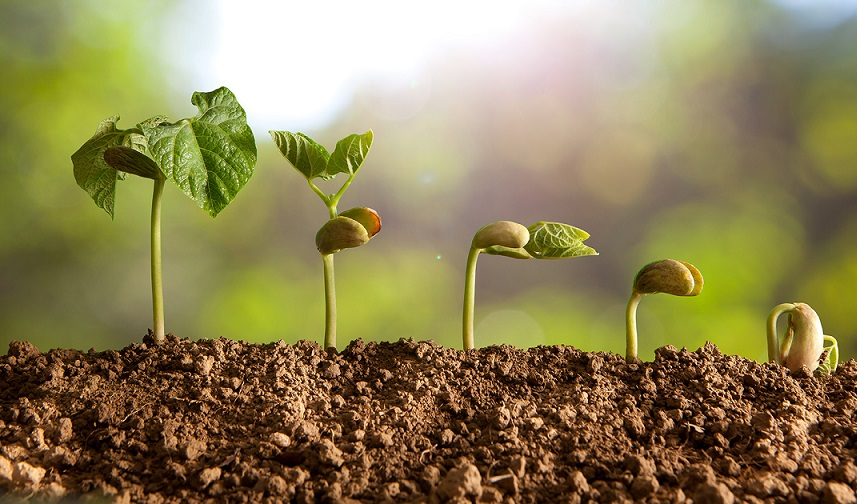 La agricultura ecológica, una opción en auge y sostenible