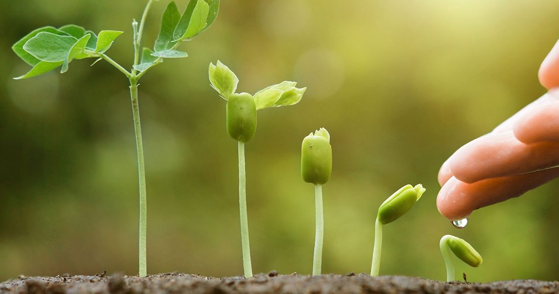 ¿Cuál es el impacto de los bioestimulantes agrícolas en la agricultura?